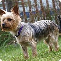 Adopt A Pet :: Charlie - Toronto/Etobicoke/GTA, ON