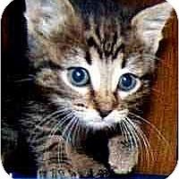 Adopt A Pet :: Bahati - Dallas, TX