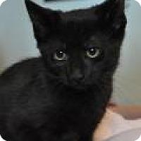 Adopt A Pet :: Trisha - Port Republic, MD