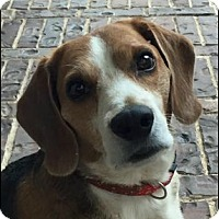 Adopt A Pet :: BOBBY - Fort Worth, TX