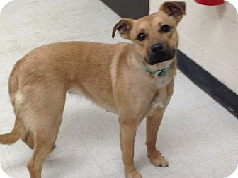 Labrador Retriever Mix Dog for adoption in Willington, Connecticut - Little One