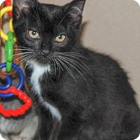 Adopt A Pet :: Olivia - The Colony, TX