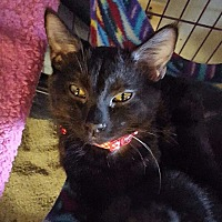 Adopt A Pet :: Sylvia - San Ramon, CA