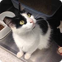 Adopt A Pet :: Marie - Newport Beach, CA