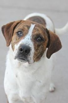 Hound (Unknown Type) Mix Dog for adoption in Yukon, Oklahoma - Moonpie