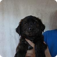 Adopt A Pet :: Jax - Oviedo, FL