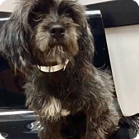 Adopt A Pet :: Fern - Weston, FL