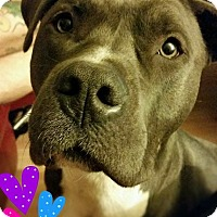 Adopt A Pet :: Memphis (COURTESY POST) - Baltimore, MD