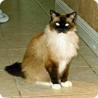 Adopt A Pet :: Sudi - Melbourne, FL