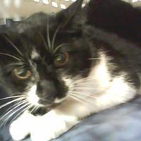 Adopt A Pet :: Cookie - Cincinnati, OH