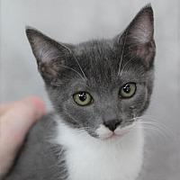 Adopt A Pet :: Gollum M - Raleigh, NC