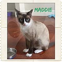 Adopt A Pet :: Maddie. - Royal Palm Beach, FL
