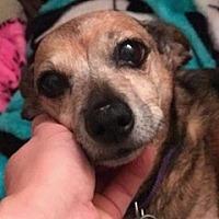 Adopt A Pet :: Baron - Bloomington, IL