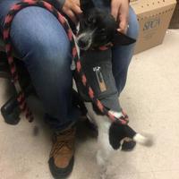 Adopt A Pet :: Oreo - Philadelphia, PA