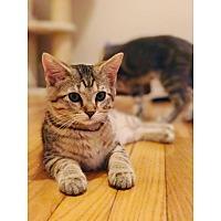 Adopt A Pet :: Archie - Lexington, KY