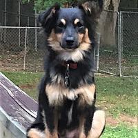 Adopt A Pet :: Hawkeye - Allentown, PA