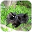 Photo 3 - Domestic Longhair Cat for adoption in Portland, Oregon - Jackson (Handsome!)