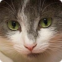 Adopt A Pet :: Alvin - Bulverde, TX