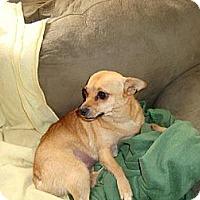 Adopt A Pet :: China - Leesport, PA