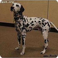 Adopt A Pet :: TomTom - Newcastle, OK