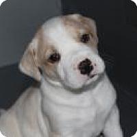 Adopt A Pet :: Baby Theo - Marlton, NJ