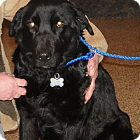 Adopt A Pet :: Maddie - Columbus, IN