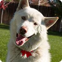 Adopt A Pet :: Keibou - West Richland, WA