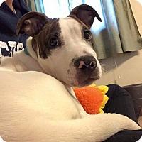 Adopt A Pet :: Hurley - Southampton, PA