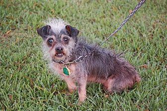 Chinese Crested/Pug Mix Dog for adoption in Winder, Georgia - Sam