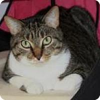 Adopt A Pet :: Wyli - Venice, FL