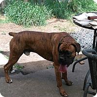 Adopt A Pet :: Jack - Treton, ON