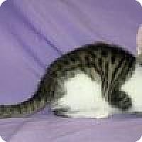 Adopt A Pet :: Sheba - Powell, OH