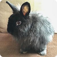 Adopt A Pet :: Budhette - Paramount, CA