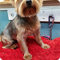 Adopt A Pet :: Shirley - Crump, TN