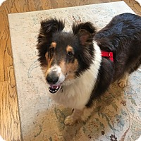 Adopt A Pet :: Poppie - Powell, OH