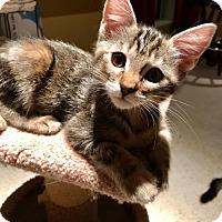 Adopt A Pet :: Marbles - Dallas, TX