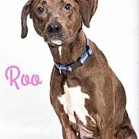 Adopt A Pet :: Roo - in Maine - kennebunkport, ME