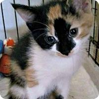 Adopt A Pet :: Rosalie - Jefferson, NC