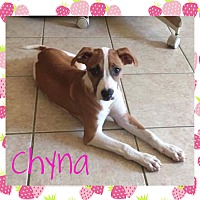 Boxer/Foxhound Mix Puppy for adoption in Fort Wayne, Indiana - Chyna