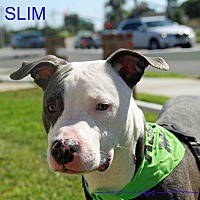 Adopt A Pet :: Slim - Lake Forest, CA