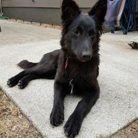 Adopt A Pet :: Marty - Saskatoon, SK
