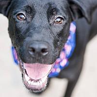Adopt A Pet :: Marcus - Virginia Beach, VA