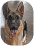 German Shepherd Dog Dog for adoption in Houston, Texas - Tommy Lee
