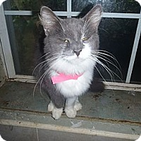 Adopt A Pet :: BUNNIE - Port Richey, FL