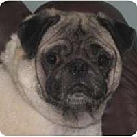 Adopt A Pet :: Gumby-NJ - Mays Landing, NJ