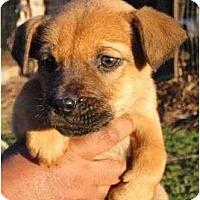 Adopt A Pet :: Streak - Allentown, PA
