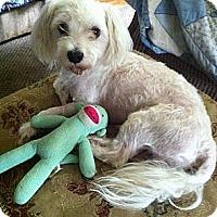 Adopt A Pet :: *Benson - PENDING - Westport, CT