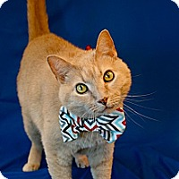 Adopt A Pet :: 5-Finger Joe - Green Bay, WI