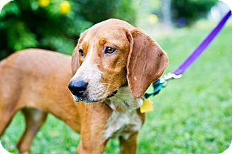 Redbone Coonhound Mix Dog for adoption in Houston, Texas - Nadia