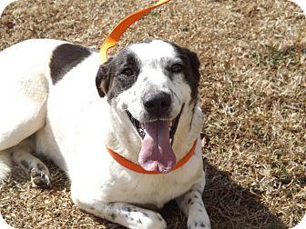 Collie/Shepherd (Unknown Type) Mix Dog for adoption in Thomaston, Georgia - Samantha